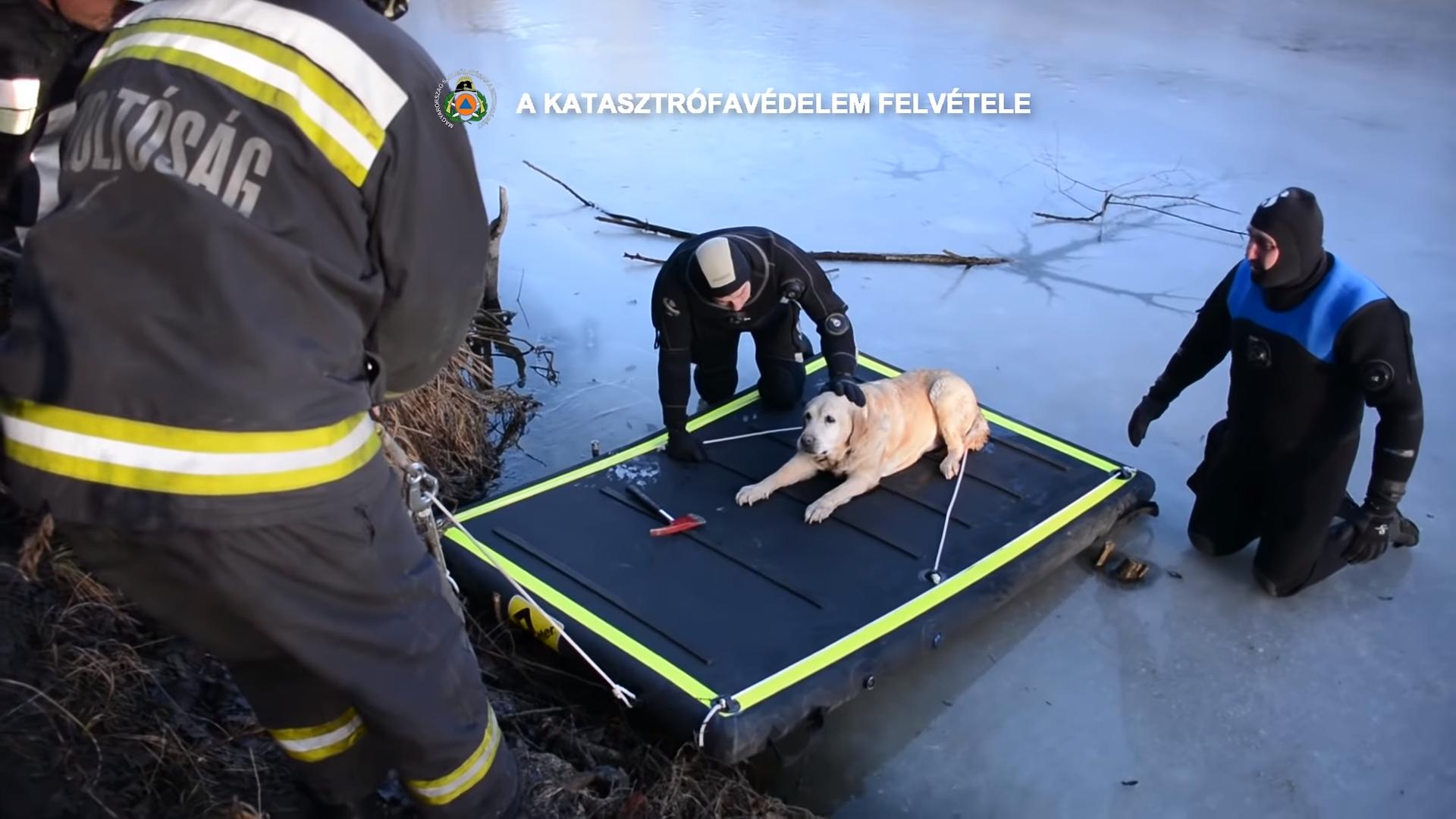 Pécel, dog, rescue, lake
