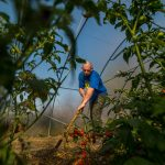 Hungarian farm gate prices up 4.4 pc, industrial output up 4.0 pc in November 2018