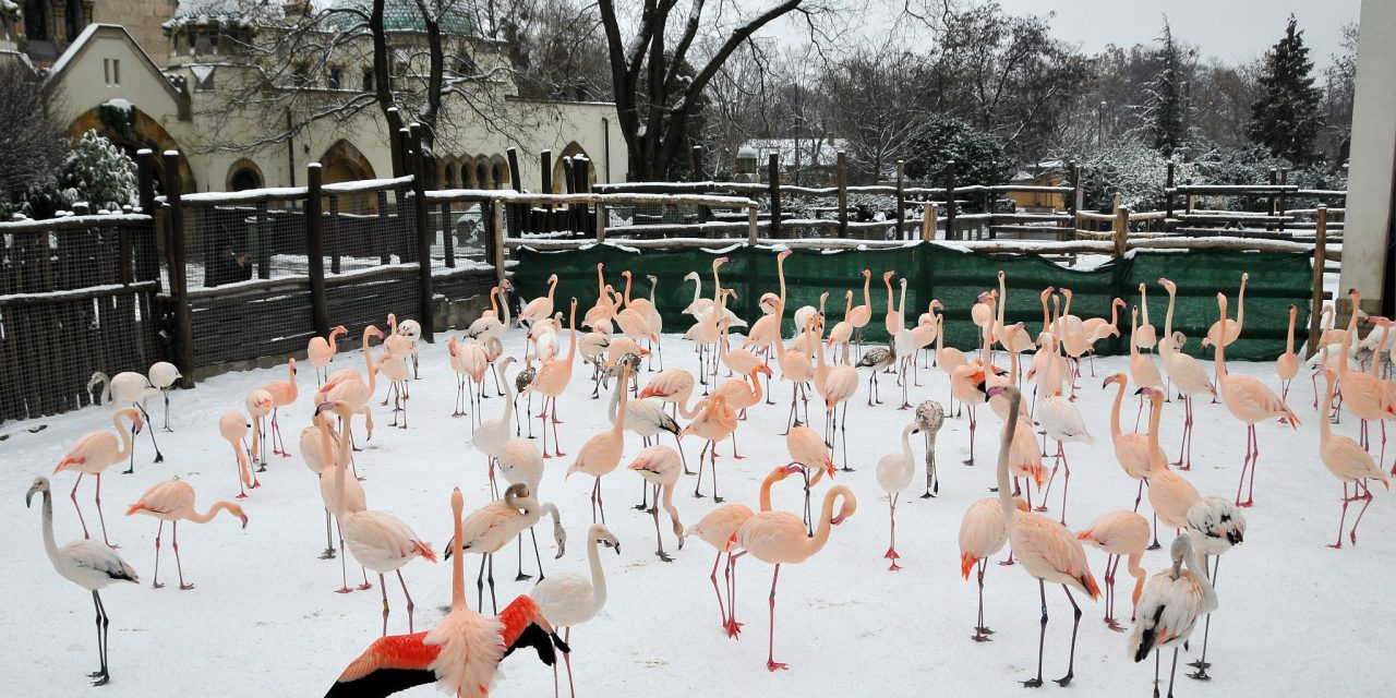 Budapest Zoo's collection among most diverse in Europe!