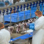 Hungary is the 2nd largest producer of duck meat in Europe, here is the newest plant – Photos
