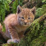 #wild #animals #hungary