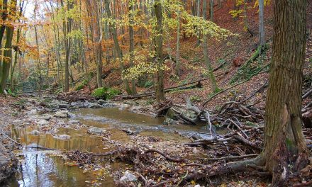Hungary's most beautiful natural wonders: Cuha stream – Photos
