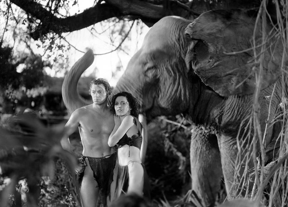 Weissmuller, Tarzan, elephant, movie, Hollywood