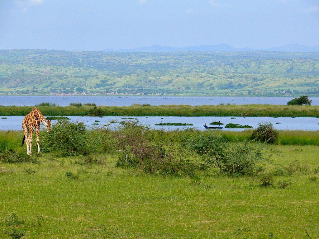 Lake Albert, Africa, nature, Nile