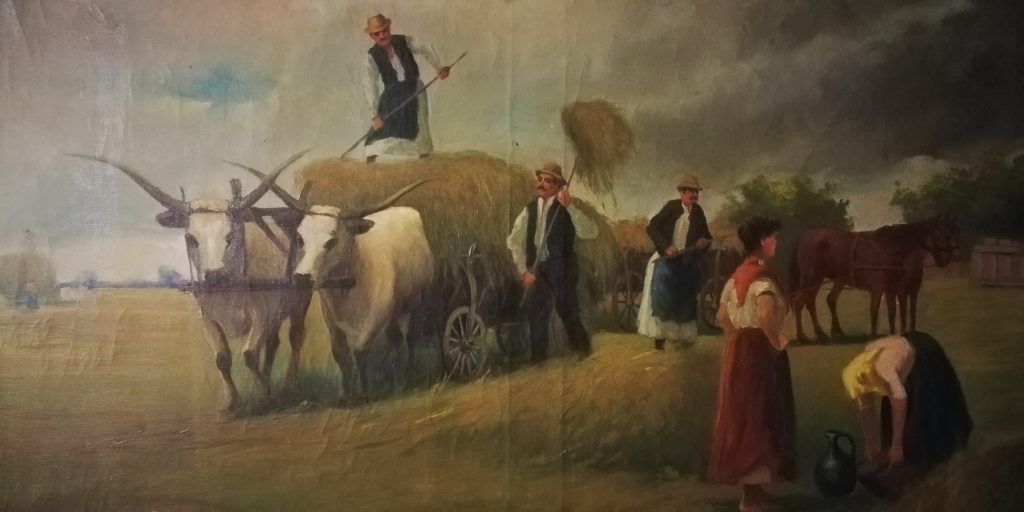 Hungarian Grey, animal, Hungary, farmers