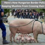 No! It is fake news that the Hungarian police protects the border with pigs!