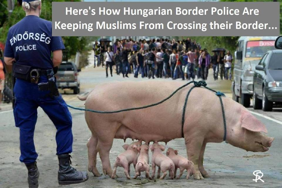 Hungarian police border migrant pig