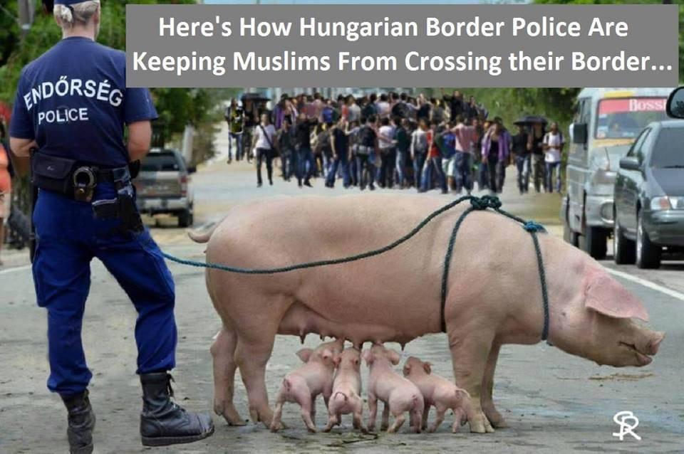 Hungarian police border migrant pig