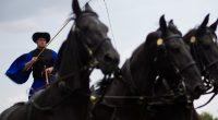 Mátai Ménes, horses, Hortobágy, Hungary