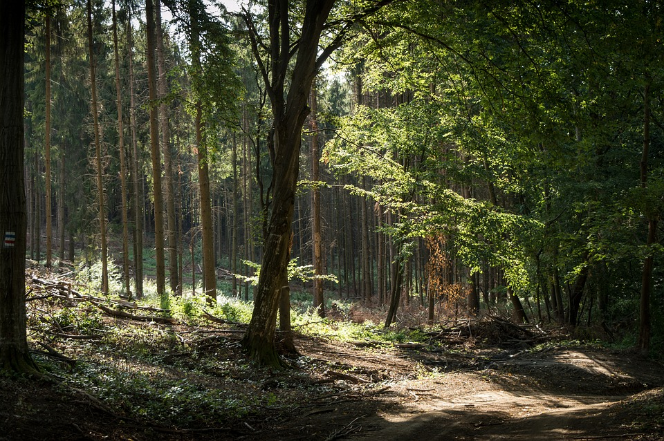 Bükk forest