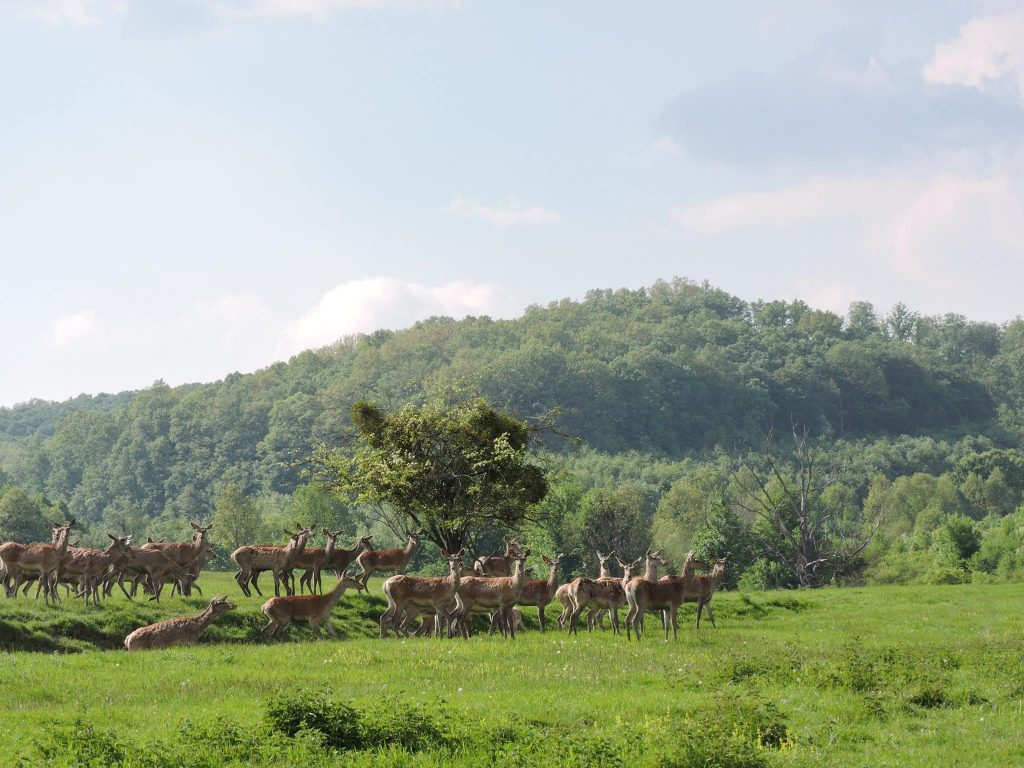 deer farm, animals, nature