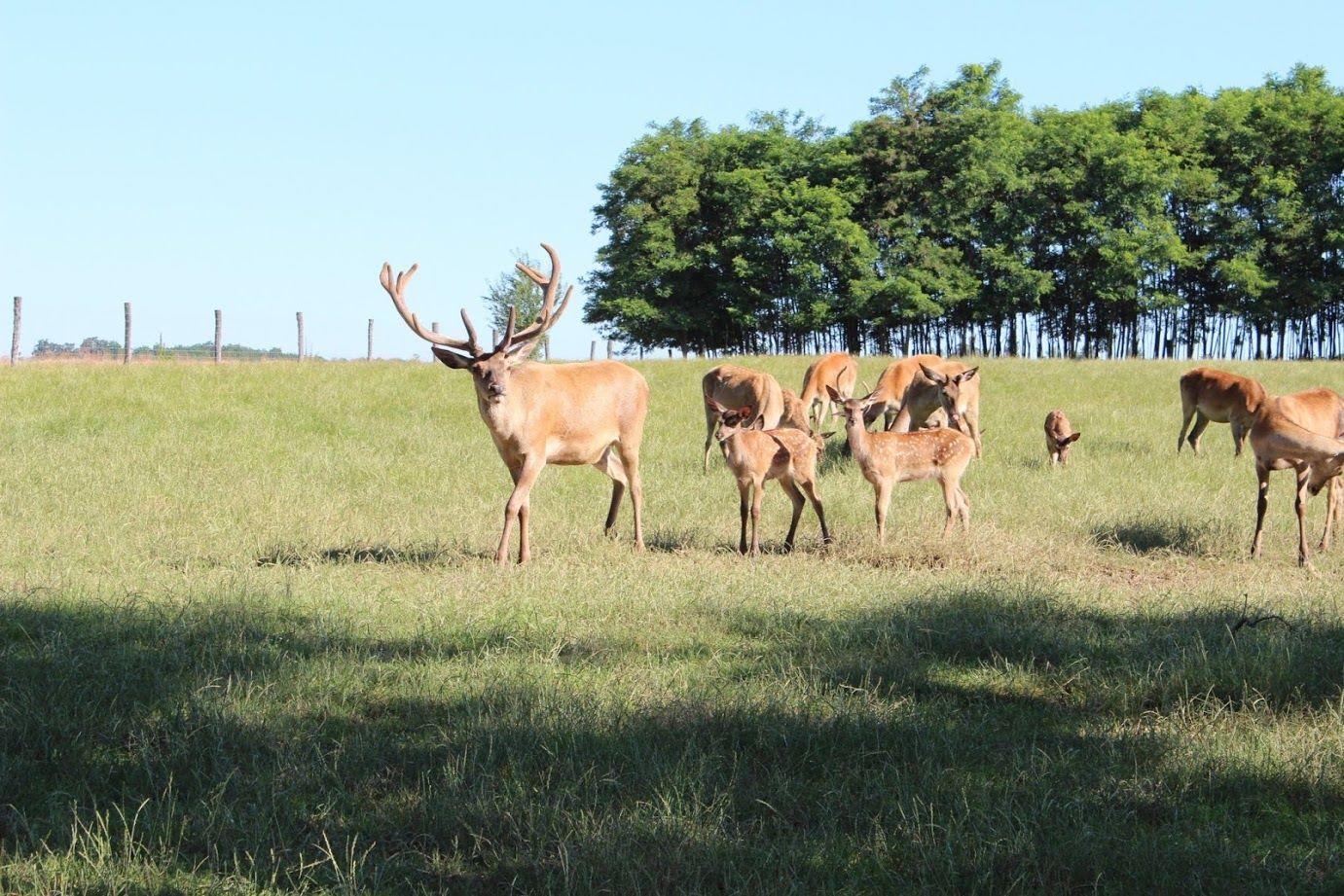 deer farm, animals, nature