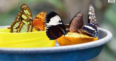 butterfly garden budapest zoo Bagosi Zoltan