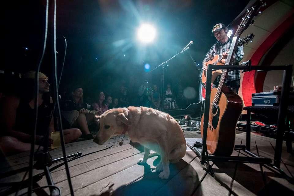 fishing on orfű dog on stage
