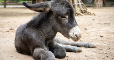 Newborn donkey at Debrecen Zoo