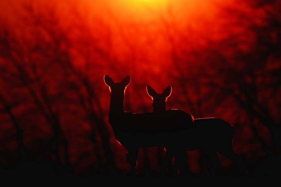 WOW! Hungarian success at Italian nature photography competition - photos