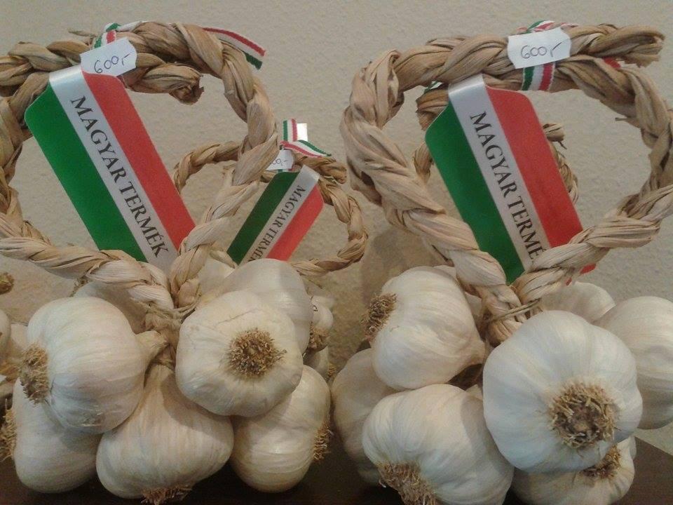 Record - longest string of garlic Makó