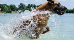 dog, water, swimming, summer