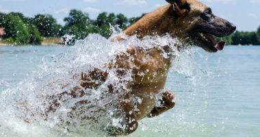 dog, water, swimming, summer