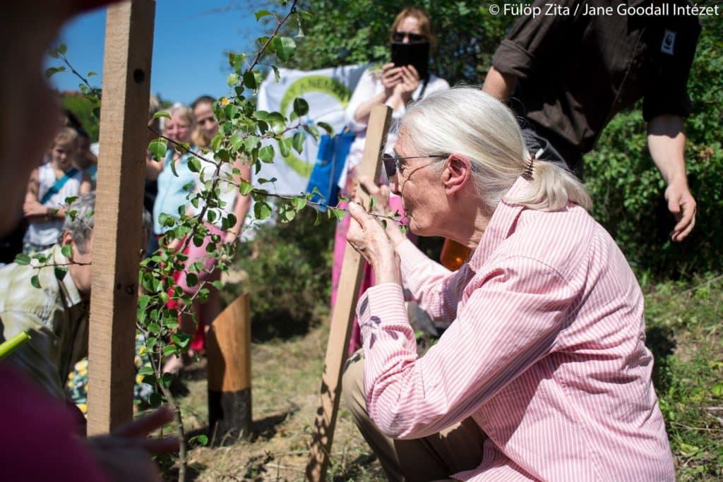 jane goodall kissing plant on sashegy
