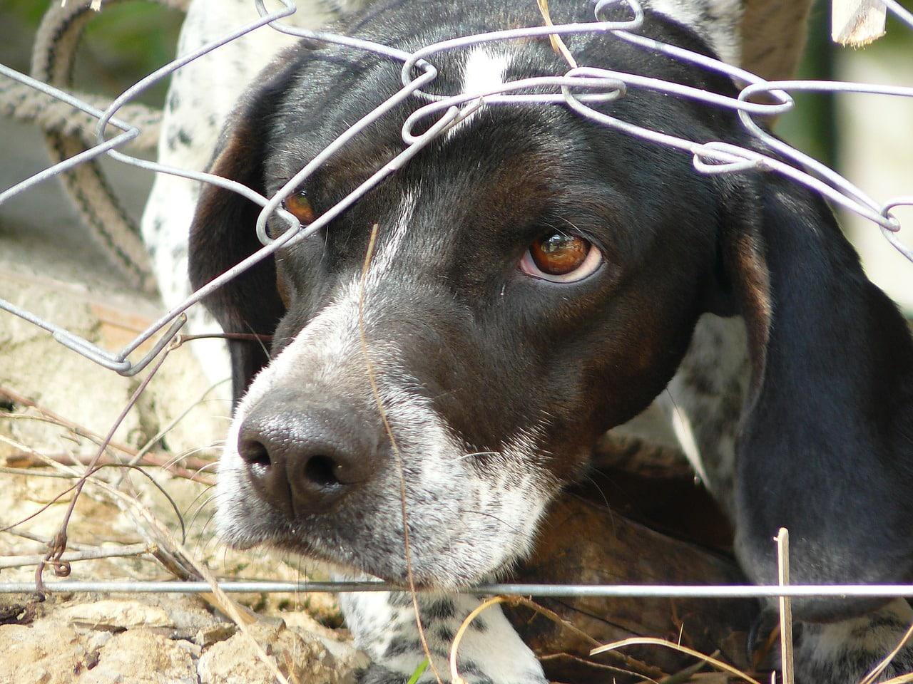 Hungarian couple arrested in England for torturing then killing their own dog