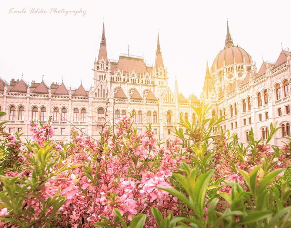 sunny parliament
