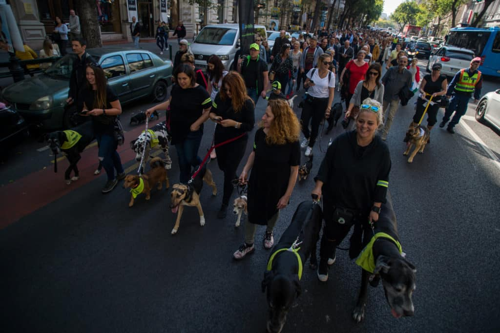 critical mass with dogs