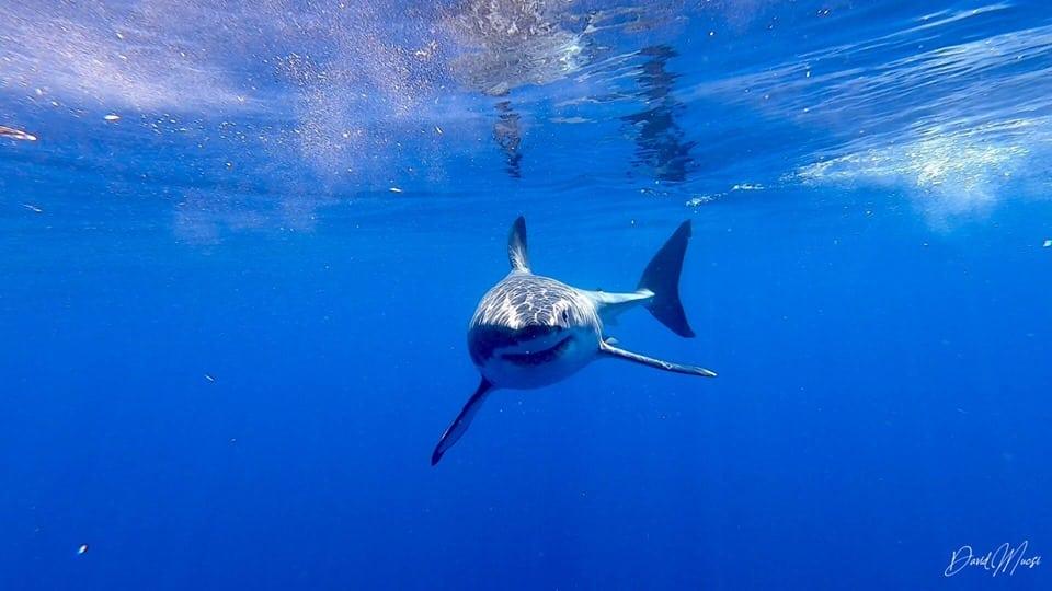 Hungary shark photographer