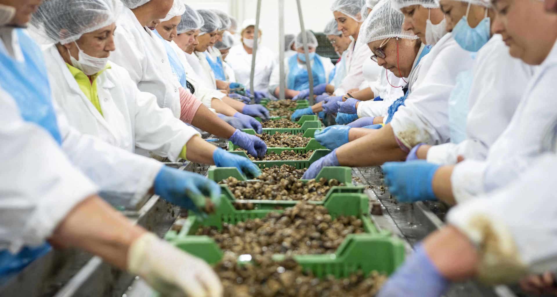 workers-hungary kisvárda