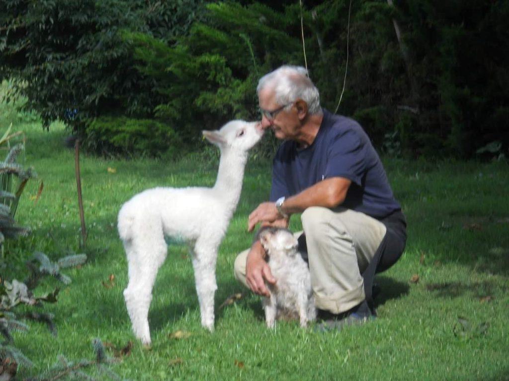 Demjén, family, Hungary, alpaca