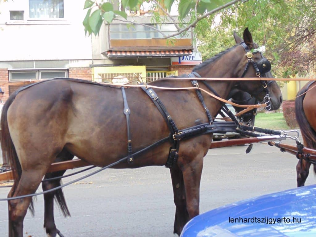 horse, Makó, Lehardt, Hungary