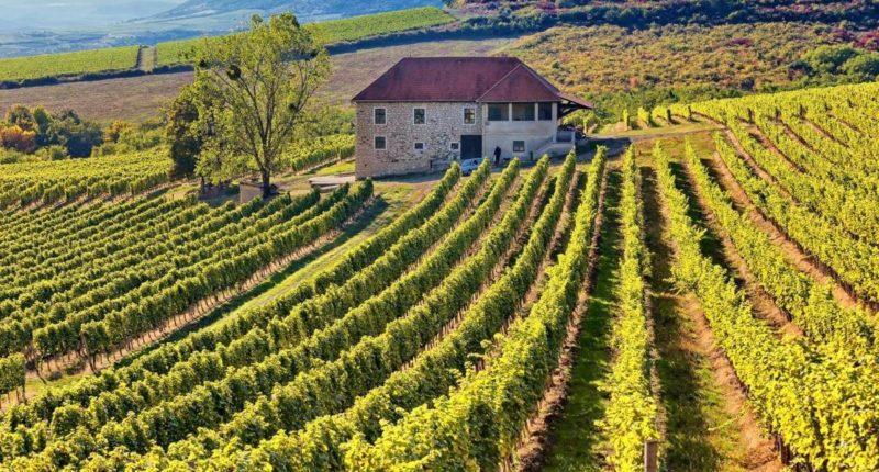 hungary wine vineyard
