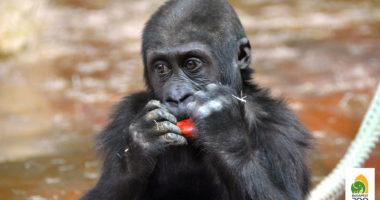 budapest zoo monkey