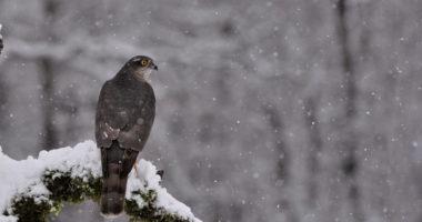 nature-hungary-weather winter snow