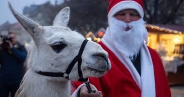 pécs advent christmas market