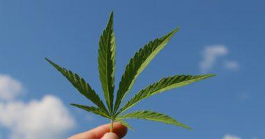 hemp leaf marihuana marijuana sky
