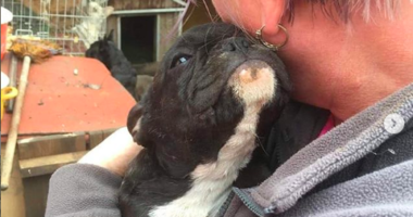 lindsay scanlon french bulldog rescue hungary uk instagram