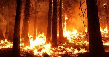 wildfire bushfire australia