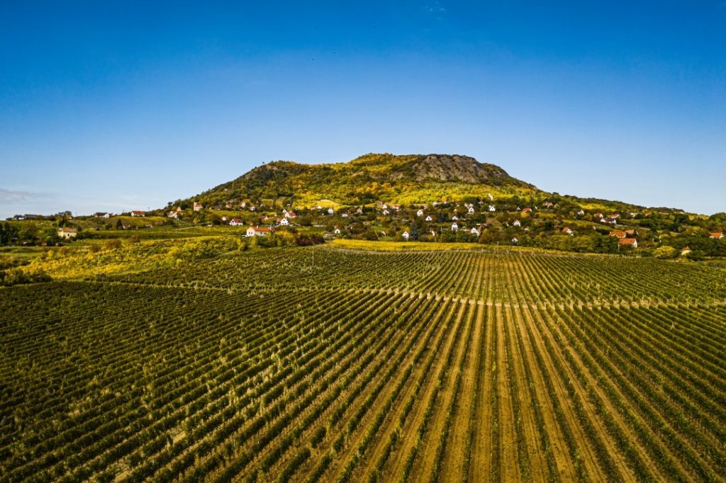 Balaton felvidék, wine, region, Hungary