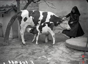 Hungary, village, folk culture, lady, animal
