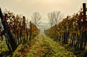 Tokaj, wine, region, Hungary
