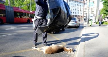 Deer hit in Budapest