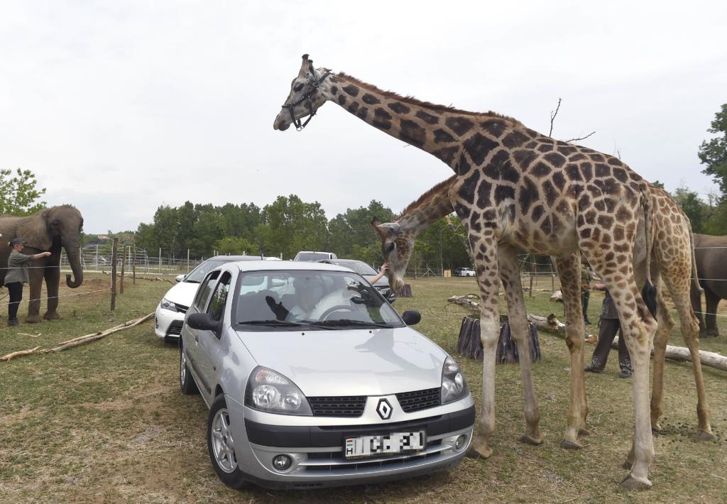 Hungarian safari park
