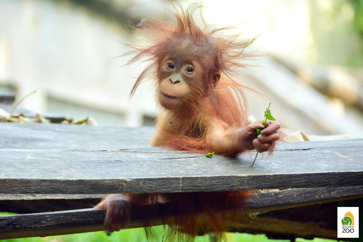 budapest zoo baby monkey