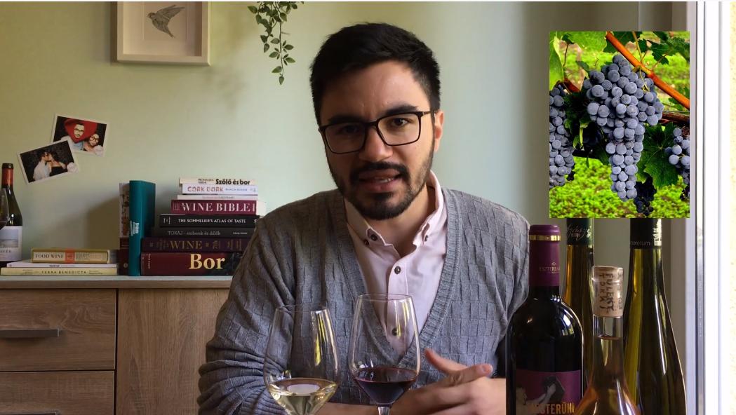 wine explanation video