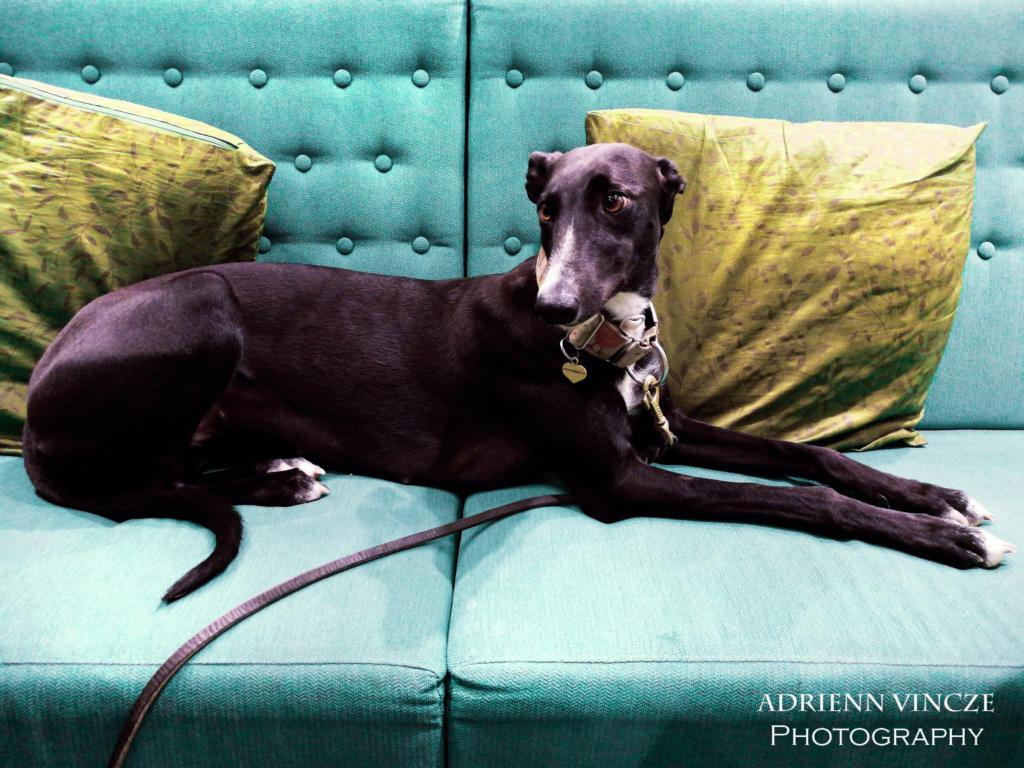 elegance on the sofa