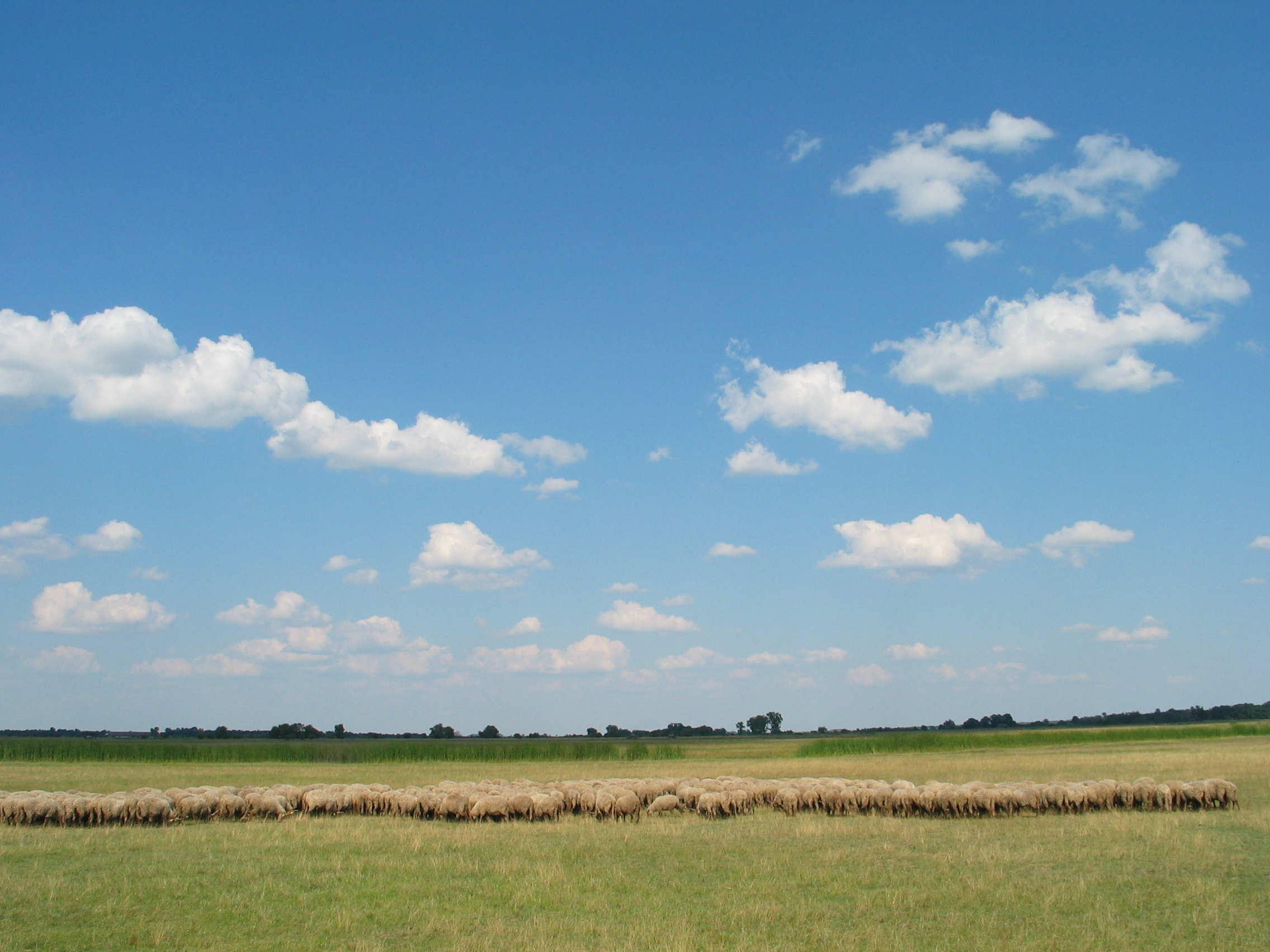 Great Hungarian Plain desert