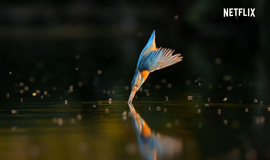 Netflic Our Planet nature bird