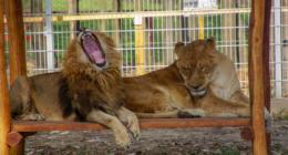 Lion Hungary Veresegyház