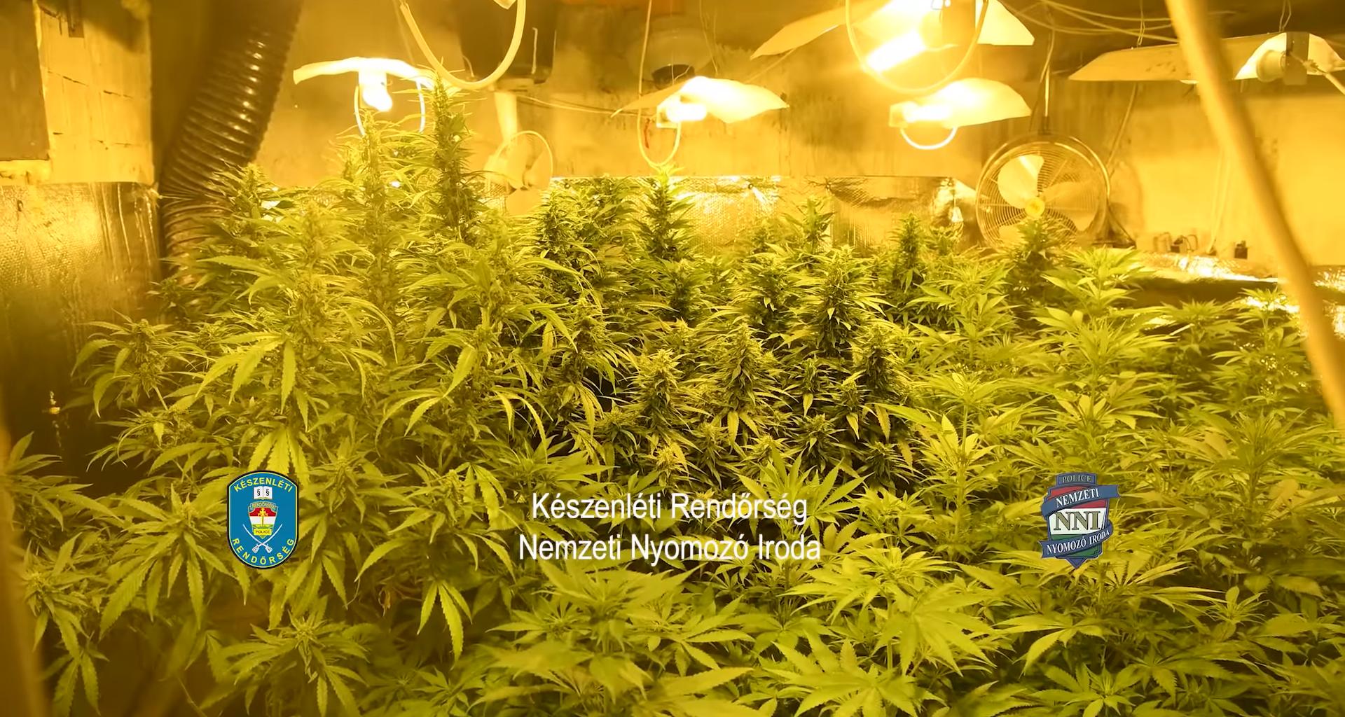 Police-drug-marijuana